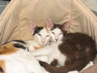 PD kitten and OS mommy cat
